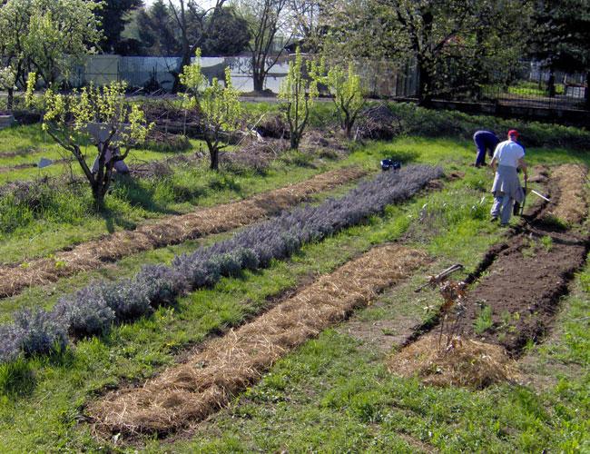 Libero orto l orto comunitario il giardino degli aromi - L orto in giardino ...