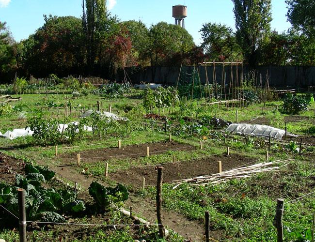 Libero orto l orto comunitario il giardino degli aromi for Orto giardino