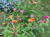 fioriture-condivise-cormano