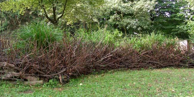 Siepi di benjes il giardino degli aromi - Siepi ornamentali da giardino ...