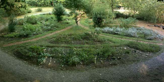 Il mandala delle erbe