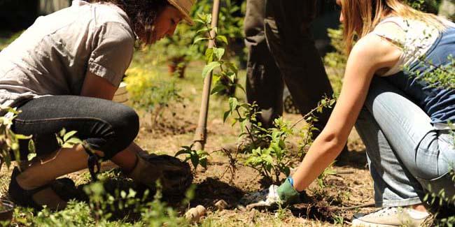 Libero orto. L'orto-giardino comunitario