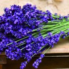 bouquet-lavanda1
