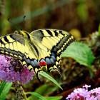 farfalla-agli-orti-2