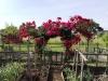 fioriture-negli-orti-condivisi-di-cormano